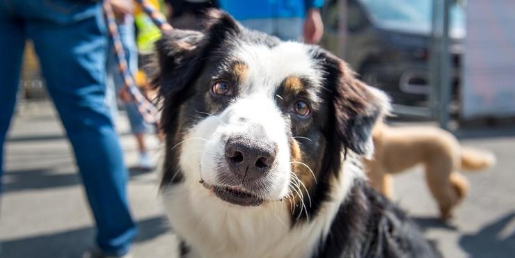 FOTOD JA VIDEO! Tallinna linnapea õnnitles Loomade Varjupaika kolmanda sünnipäeva puhul