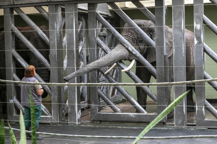 GALERII! Elevantide elust Tallinna loomaaias