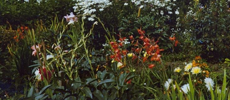 Tallinna Botaanikaaias tutvustatakse taluaia taimi