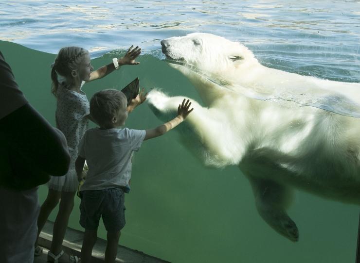 VAATA FOTOSID! Tallinna linnajuhid tegid loomaaiale sünnipäeva puhul kingitusi