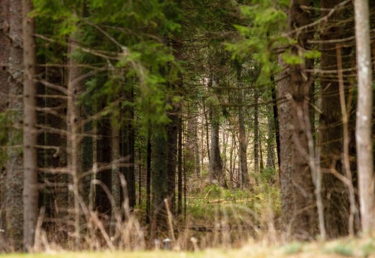 Eesti inimesed soetasid ühiselt esimese püsimetsakinnistu