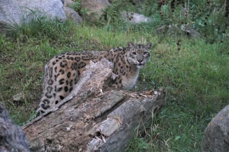 Loomaaed: Vaatamata sügisilmale on loomad aktiivsed, häälekad ja tegutsemisvalmis