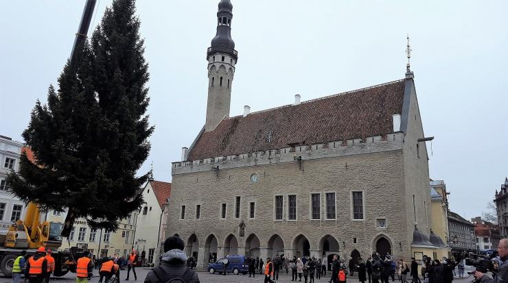 Tallinn otsib jõulukuuske