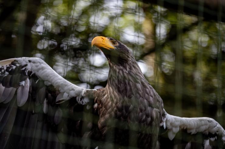 Tallinna loomaaias räägitakse Teadlaste Ööl loomade heaolust