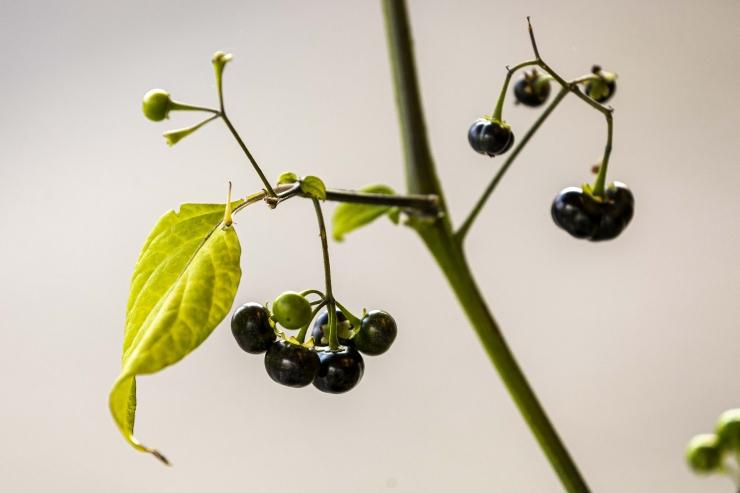 GALERIID: Botaanikaaias toimus põnev sügisandide näitus
