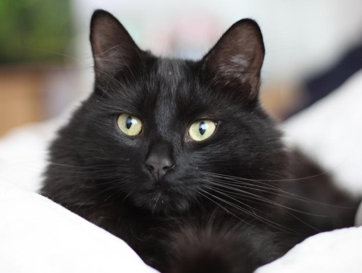 Musta kassi kuu raames saab kiisu viia koju kõigest ühe euroga