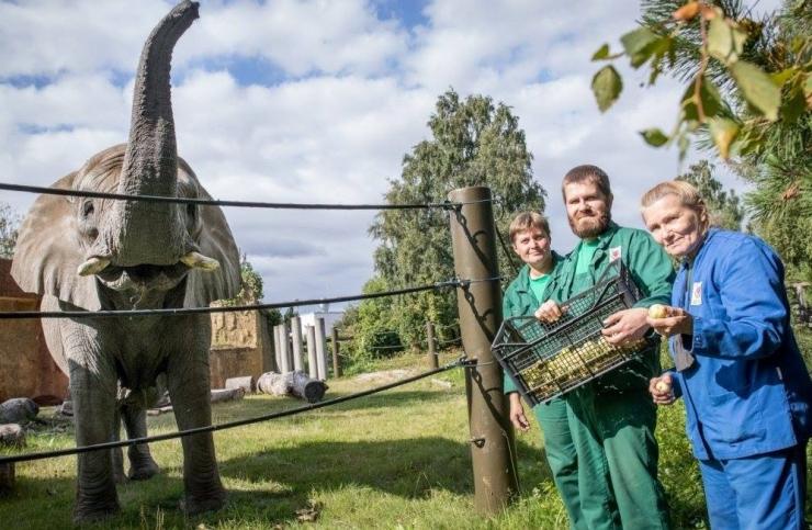 VAATA VIDEOT! Tallinna loomaaednikud tutvustasid oma põnevat tööd