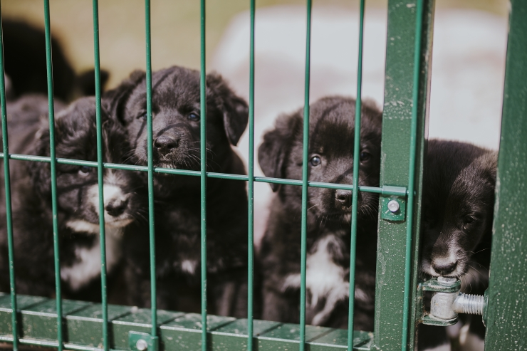 Loomakaitsepäeval oodatakse loomasõpru varjupaikadesse külla