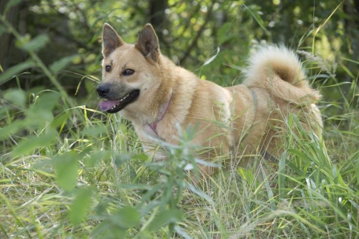Tallinna loomade varjupaiga juhataja Relika Lind: loom soovib armastada ja olla armastatud