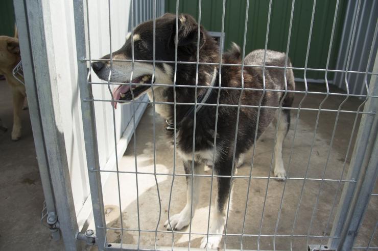 Loomade varjupaigad pakuvad tuge eakamate koerte võtmisel