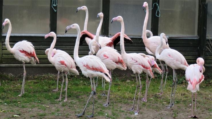 Novembrikuu laupäeviti esitleb loomaaed hallhüljeste ja kääbusjõehobudega tehtavaid tegevusi