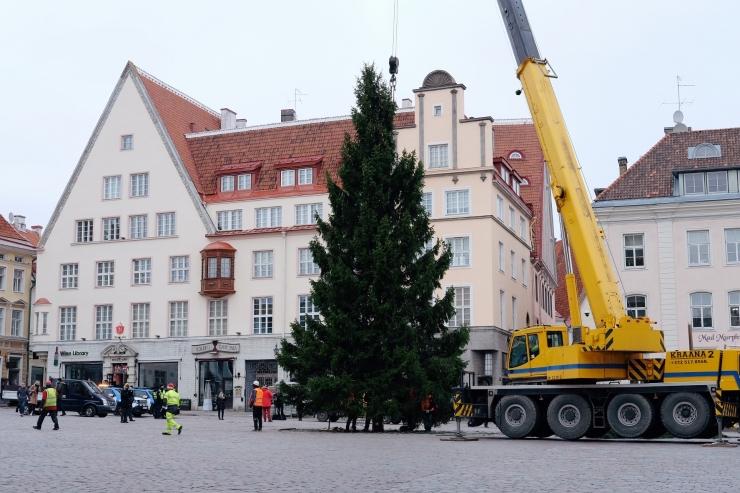 FOTOD JA VIDEO! Täna jõudis jõulukuusk Raekoja platsile