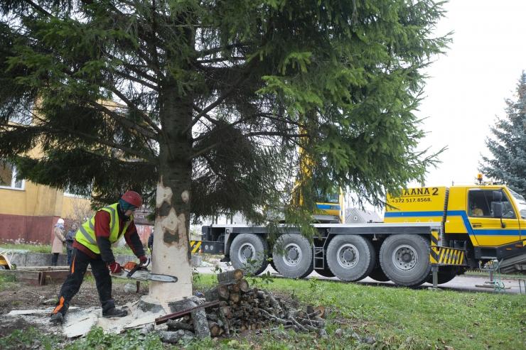 Svet: Raekoja platsile toodud kuusk saab uute puudega korvatud