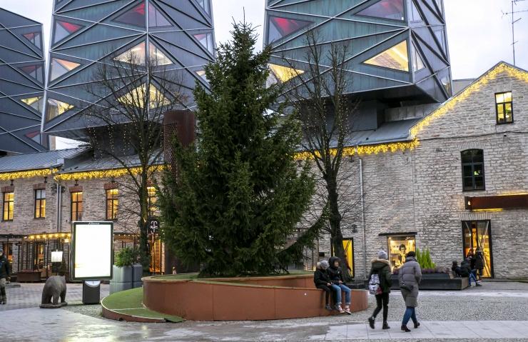 FOTOD: Rotermanni peaväljakul pandi püsti jõulukuusk