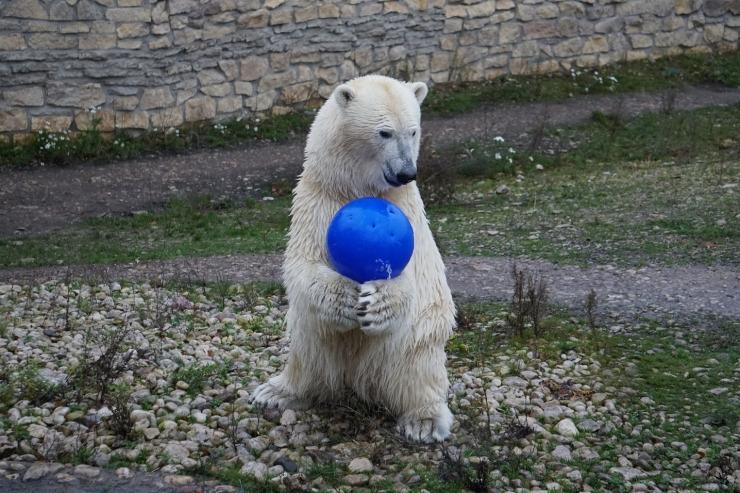 Tallinna Tammetõru lapsed kinkis loomaaia asukatele vahvaid mänguasju
