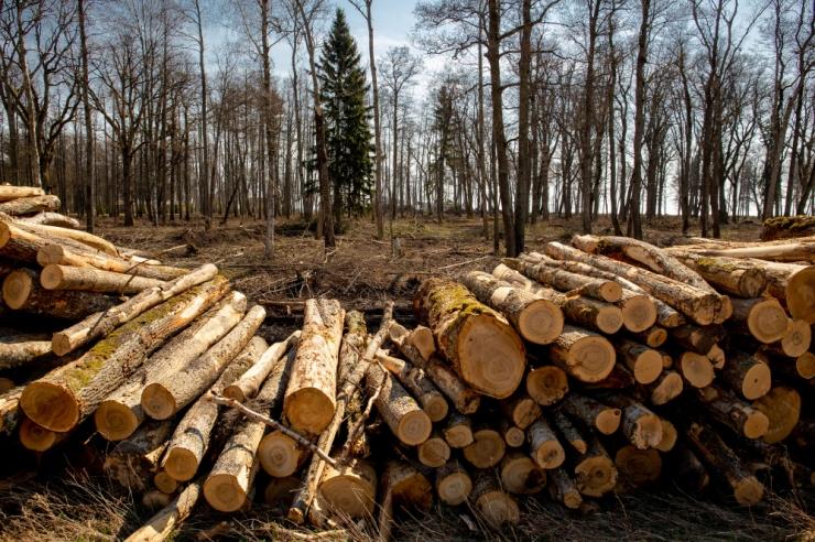 Turvafirma: metsavarguste arv on taas tõusujoonel