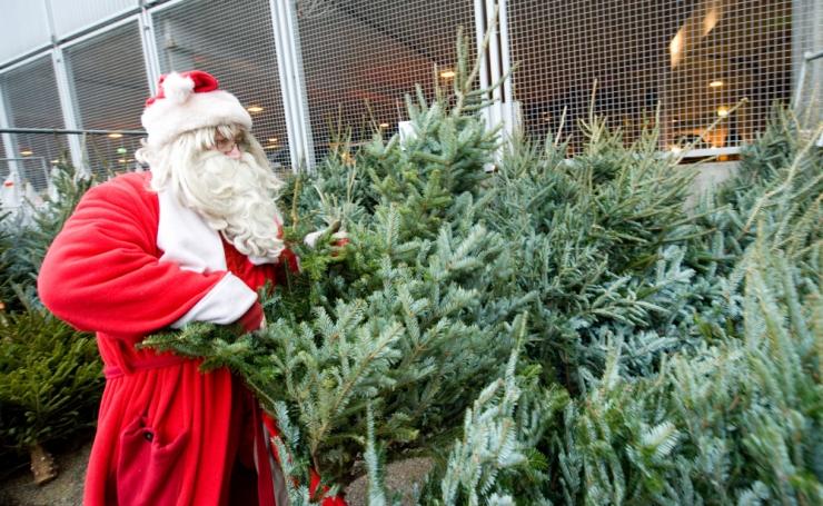 Haaberstis kogutakse kokku vanad jõulukuused