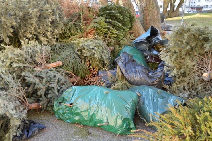 VIDEO: Kristiine vanad jõulukuused saavad hakkepuiduks