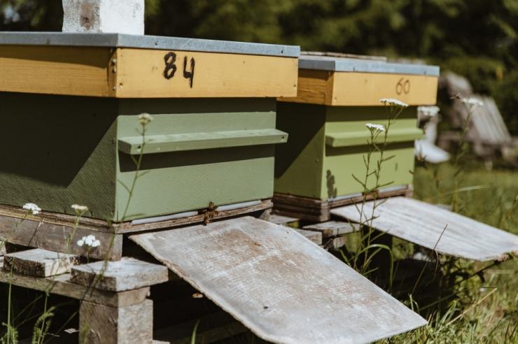 Mesinike liit plaanib korraldada mesindust tutvustava rändnäituse