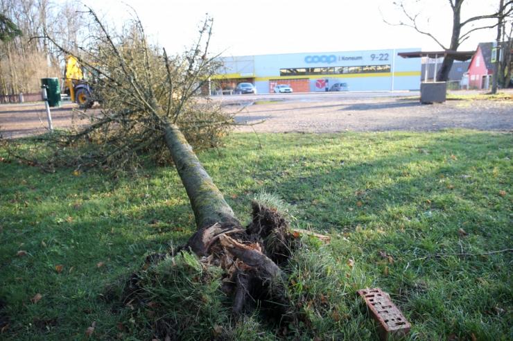 Tuuleiilid võivad teedele puid langetada