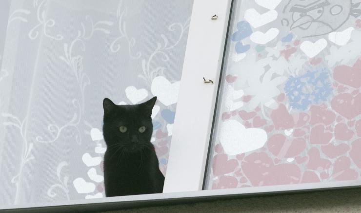 Steriliseerimine ei kaota kassist hiirekütti