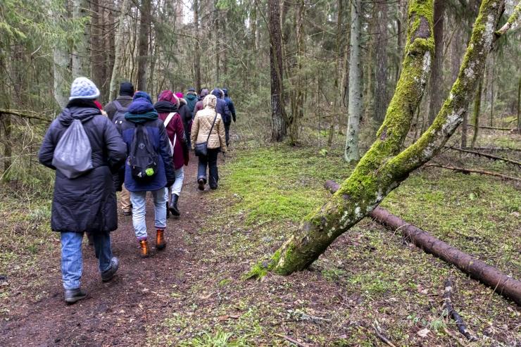 Keskkonnaministeerium soovitab rahvusvahelisel metsapäeval metsa minna