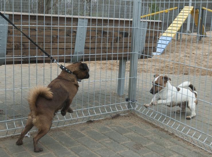 VIDEO: Tallinn sulges koerte jalutusväljakud