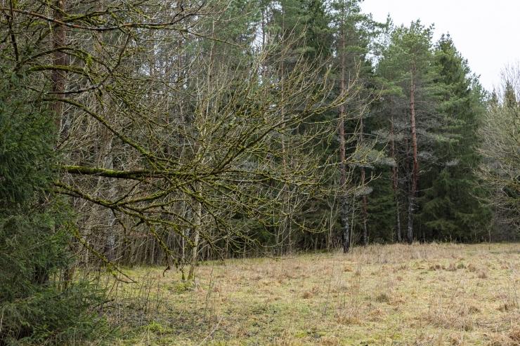 Homsest algab Eestis tuleohtlik aeg