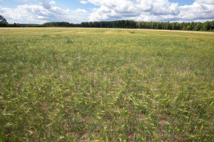 Eesti rohetehnoloogia leevendab arenguriikides kliimamuutuste mõjusid