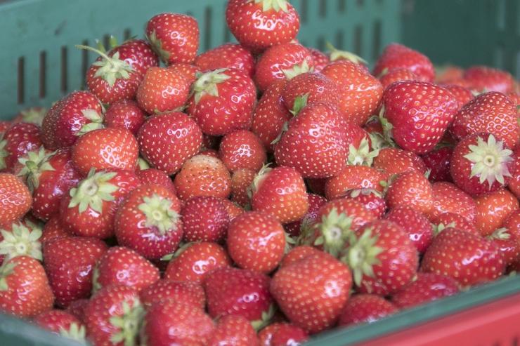 Kodumaine tööjõud tõotab kergitada Eesti marjade ja aedvilja hinda