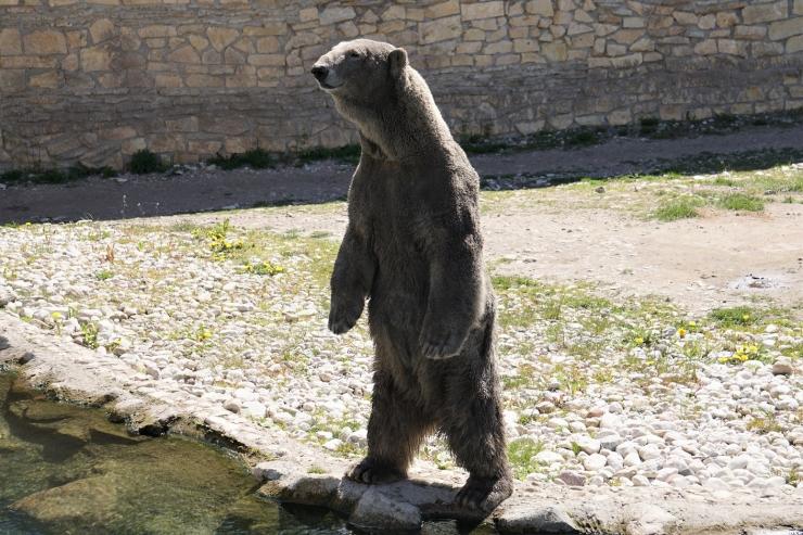 Loomaaia asukad harjuvad tasapisi uudistavate külastajatega