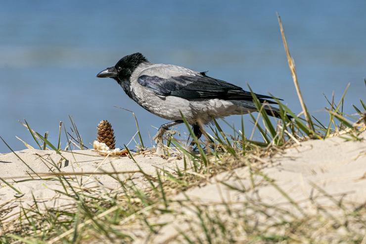 Lasnamäe ootab vihjeid linnupiinaja tabamiseks