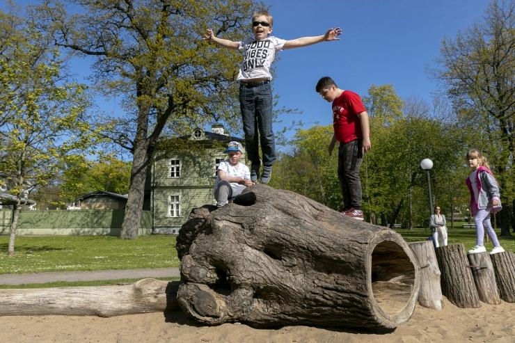 Abilinnapea Kalle Klandorf: vanade pargipuude hooldusega tagatakse eelkõige nende ohutus inimestele