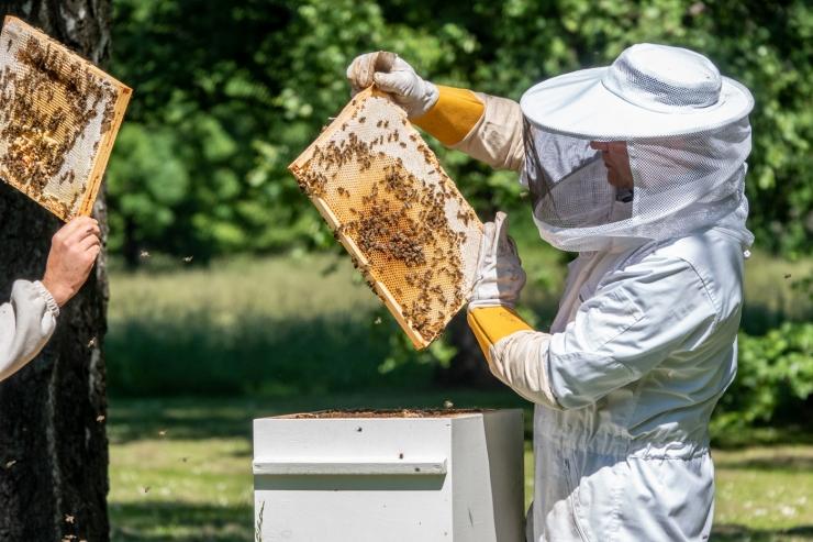 VIDEO JA FOTOD! Presidendi Kadrioru mesila andis uue saagi