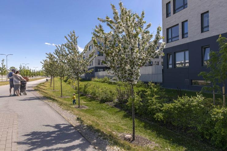 VIDEO! Tallinna kavandatakse 13,5 km pikkune rohe-kiirtee