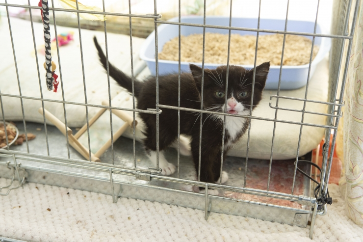 FOTOD! Tallinna loomade varjupaik: üha rohkem loomi leiab endale kodu