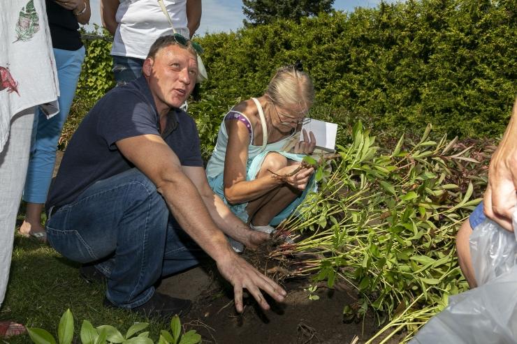 Botaanikaaed tutvustab teemapäeval ravimtaimi