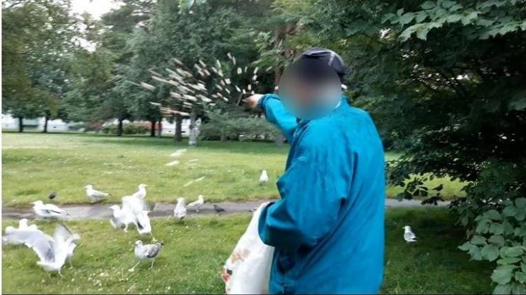 Õismäe linnumees väidab, et  toidab tuvisid-kajakaid Euroopa Liidu seaduste järgi