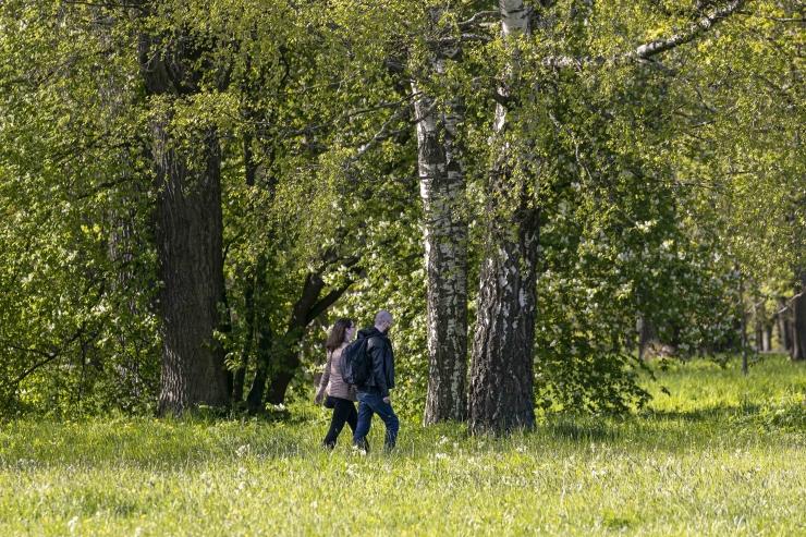 Hipilaager leidis uue asukoha Valgamaa metsade vahel