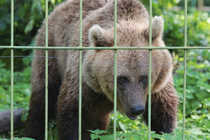 Karujahi esimesel päeval lasti Eestis neli looma