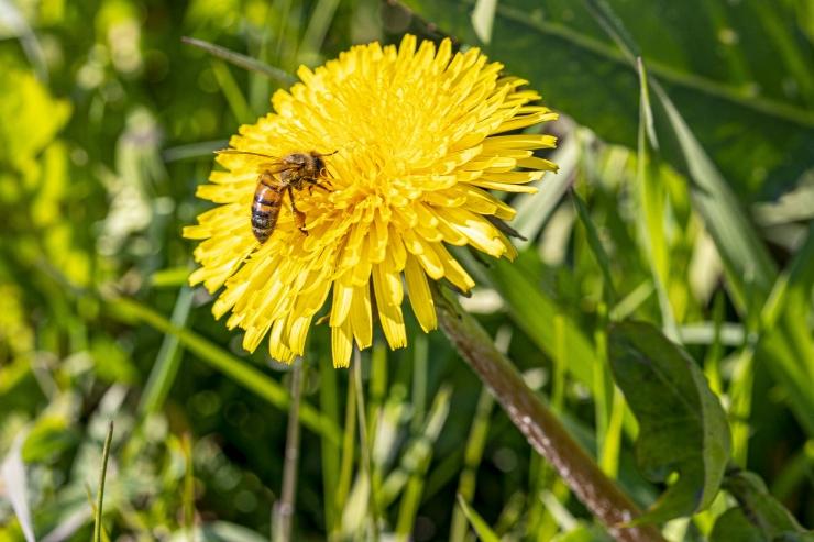 Veterinaaramet: Tallinna kesklinnas elavate mesilaste mesi on puhas
