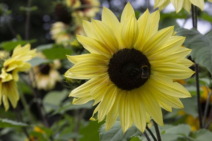 PILDID JA VIDEO! Botaanikaaias toimus hariv teemapäev ürditaimedest