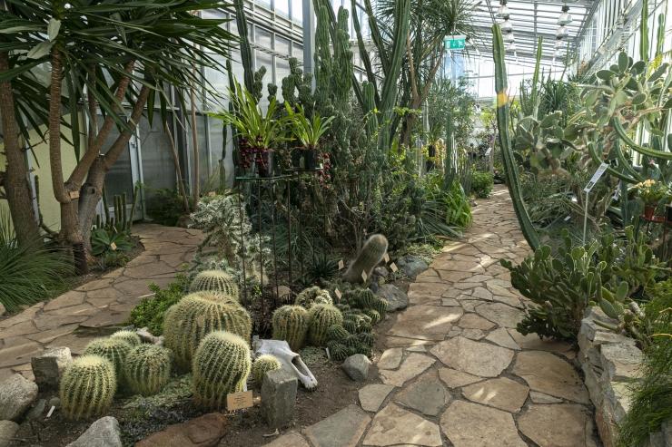 VIDEO! Botaanikaaed kutsub kanepipäevale