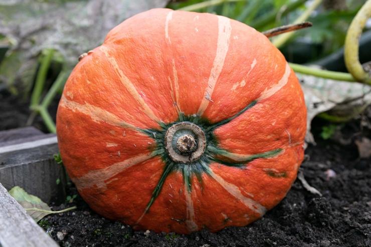 GALERII! Botaanikaaed tutvustas sügisande