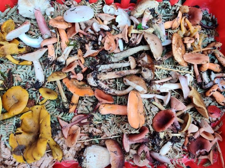 VIDEO! Seenenäitus võtab fookusesse mürkseened ja seenemürgid