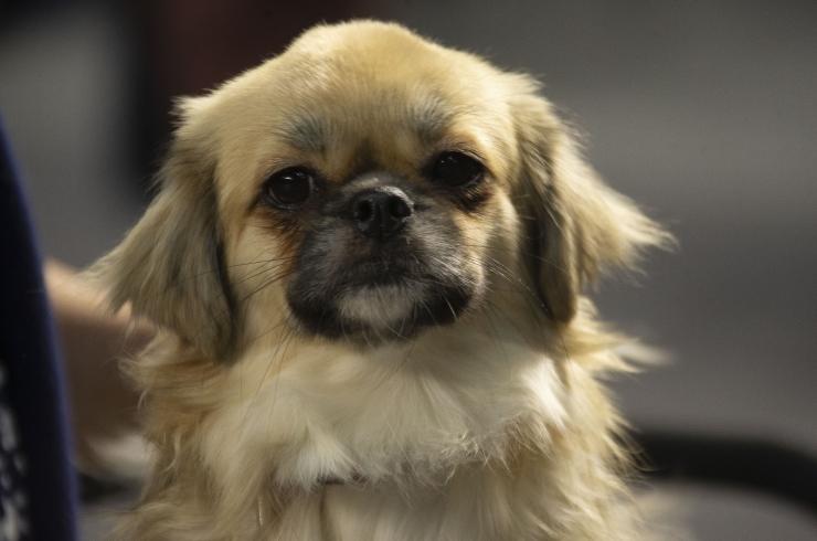 GALERII! Tallinnas toimub rahvusvaheline koertenäitus