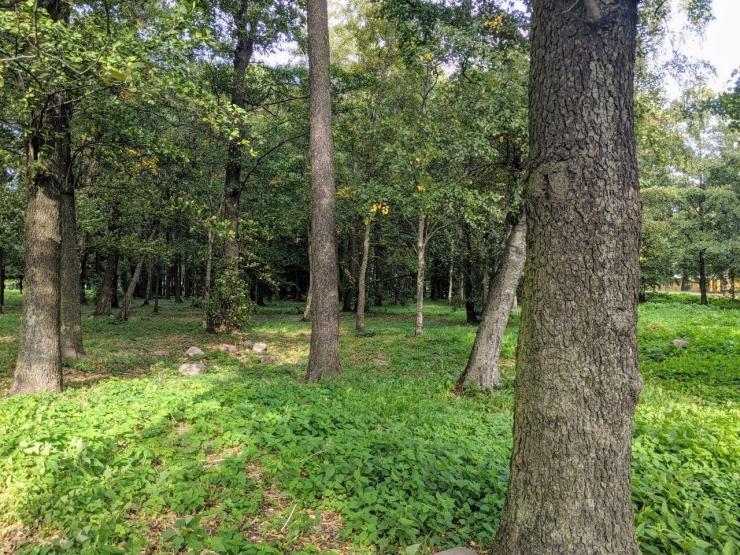 VIDEO! Kase park Koplis ehitatakse moodsaks puhkekohaks