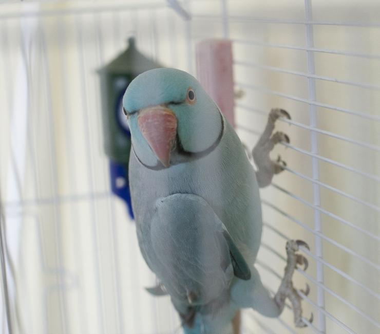 Päästjad kutsuti papagoid puu otsast alla tooma