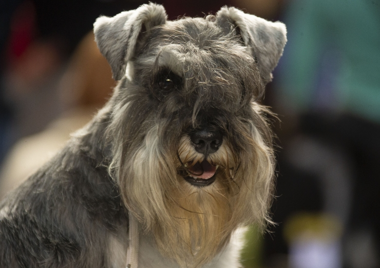 Koertetreener: halvasti käituv koer on märk laisast peremehest