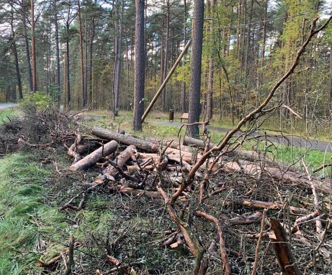 VIDEO! Pirital tehakse puude hooldus- ja raietöid